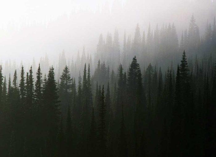 Twin Peaks and Meditation
